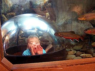 Robert ll bean fish