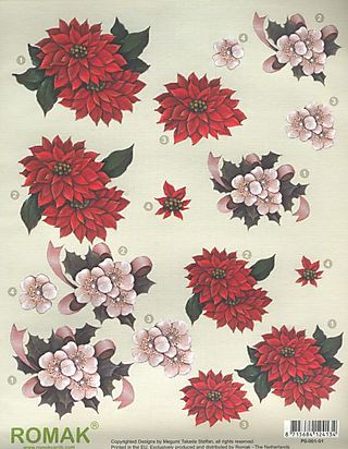 Red & pink poinsetta